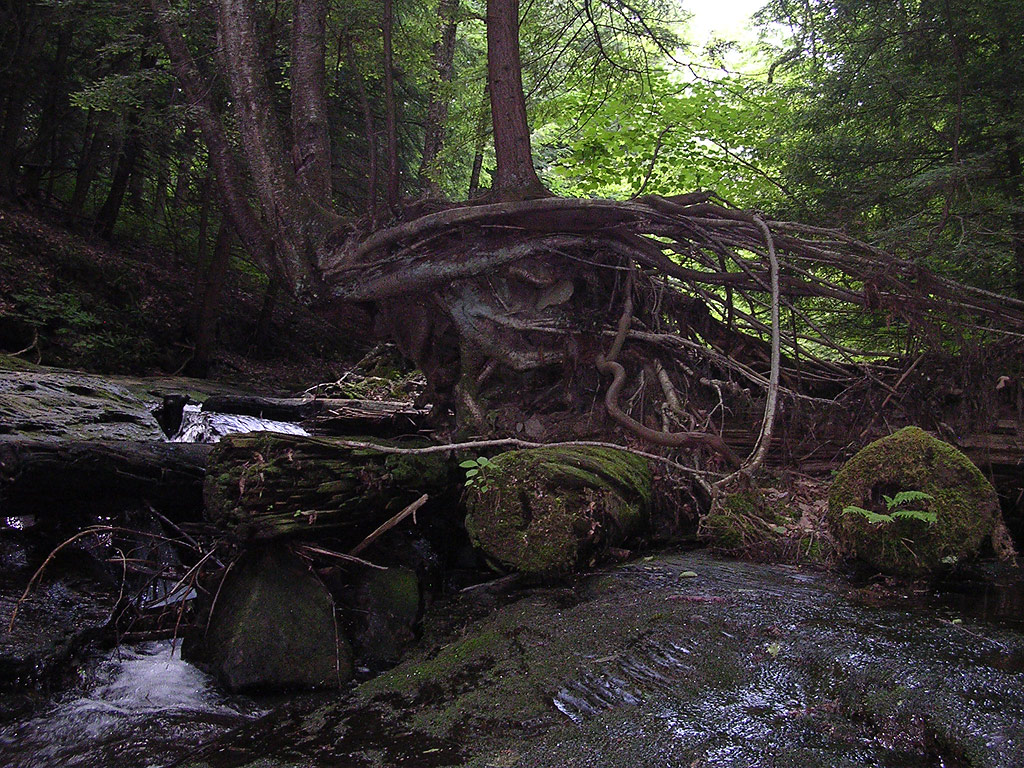 A tree just before the falls with the roots exposed.