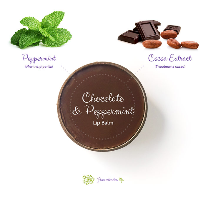 Infographic Showing Chocolate And Peppermint Lip Balm With Peppermint And Cacao Images Above