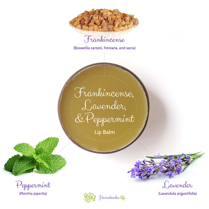 Infographic Showing Frankincense Lavender And Peppermint Lip Balm With Frankincense Lavender And Peppermint Images Around It