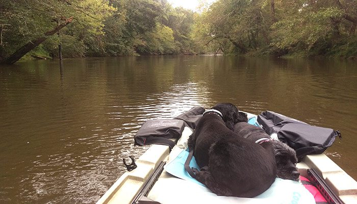 Putting In At The Neuse River For A Day Of Kayaking. The Dogs Watch Derek Lead The Way.