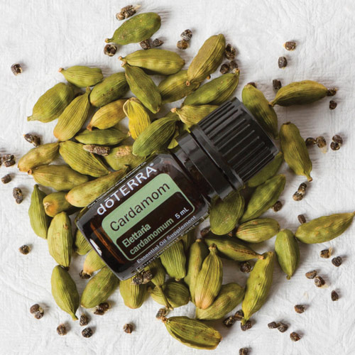 Cardamom oil bottle laying over fresh cardamom pods